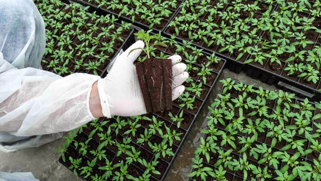 Organik Sebze Fidesi Yetiştirmek için 7 Altın Tavsiye