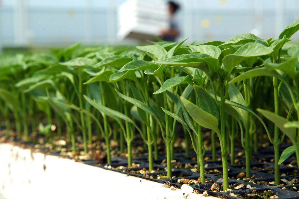 Bitki Sekonder Besinleri Hakkında