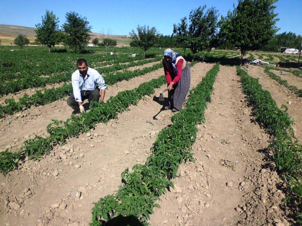 risk analizi tarım yetiştiriciliği